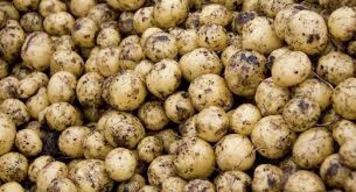 Ziemniaki  od Ziółkowskiego