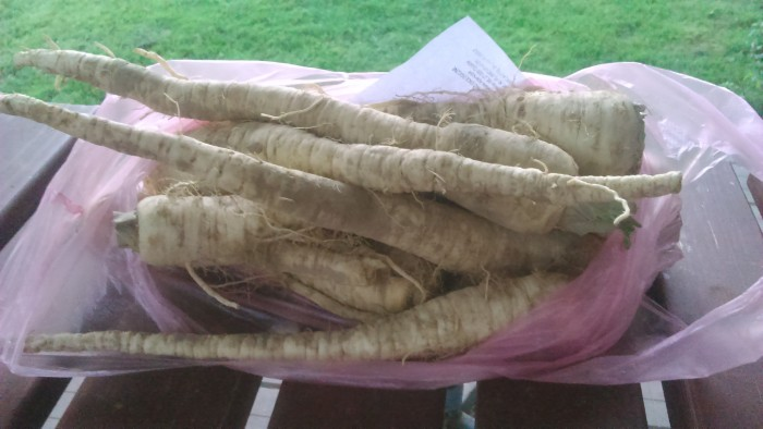 Pietruszka 0,5kg EKO  (korzeń) od p. Adamczyka