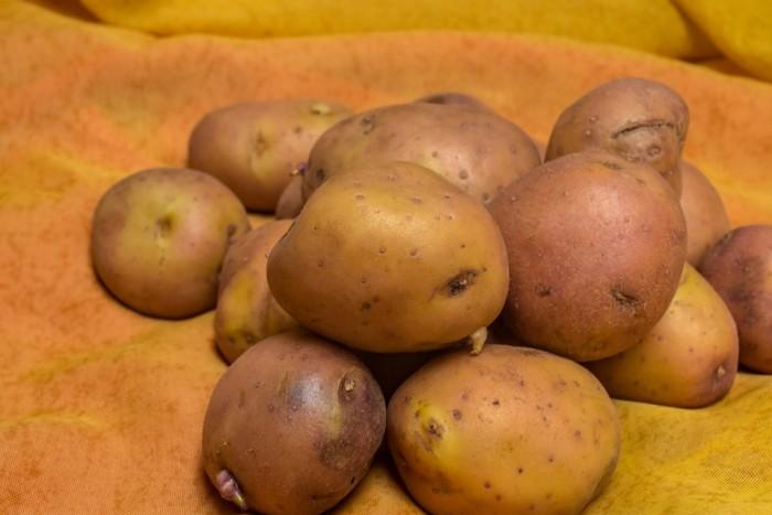 Ziemniaki Irga p. Grzegorz Jurek