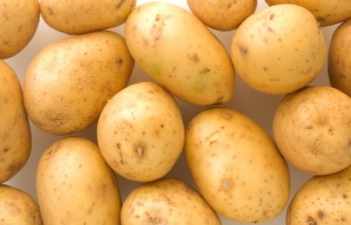 Ziemniaki Ignacy EKO od p. Adamczyka
