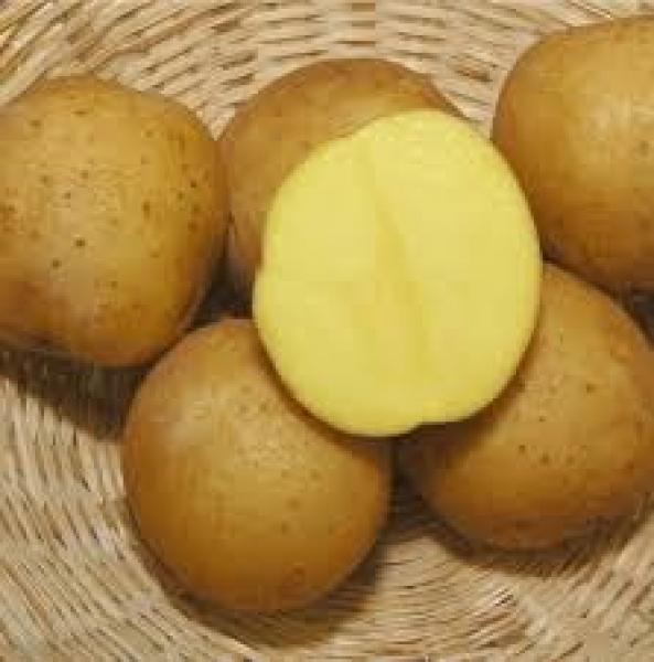 Ziemniaki Tajfun Eko od p. Laska