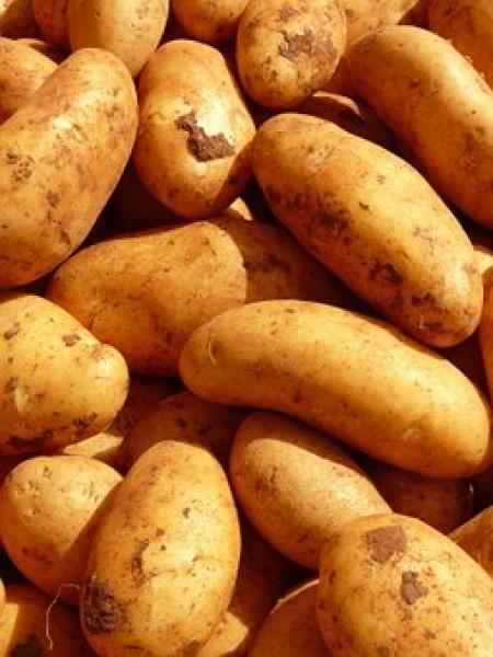 ziemniaki Bellarosa 10 kg od p. Iskry