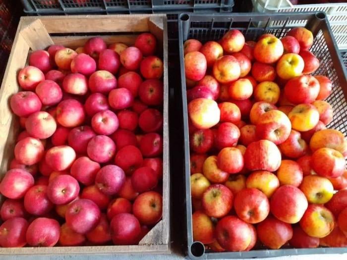 Jabłko jabłka ekologiczne Eliza promocja