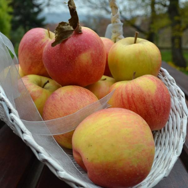 Jabłka łąckie