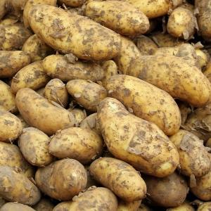 Ziemniaki mode EKO Lord