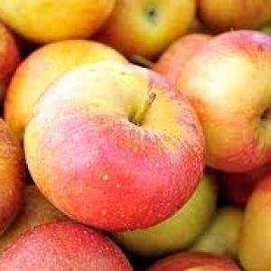 Jabłka piros EKO od p. Laska