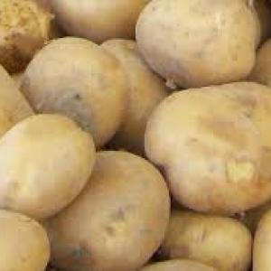Ziemniaki Gwiazda młode EKO od p. Adamczyka