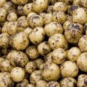 Ziemniaki wczesne od Ziółkowskiego