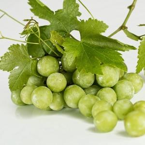 Winogrono białe od p. Kuna