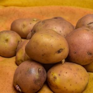 Ziemniaki Bellarosa eko od p. Iskry