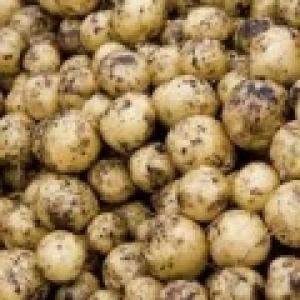 Ziemniaki młode Lord od Ziółkowskiego