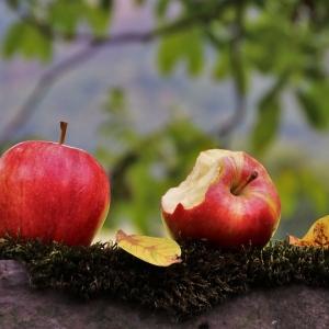 Jabłka ekologiczne champion, ligol od p. Gielecińskiego