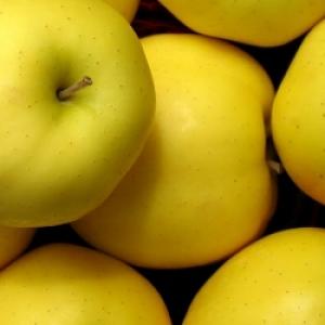 Jabłka Golden EKO od p. Laska