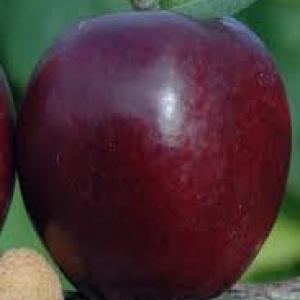Jabłka Malinówka EKO od p. Laska