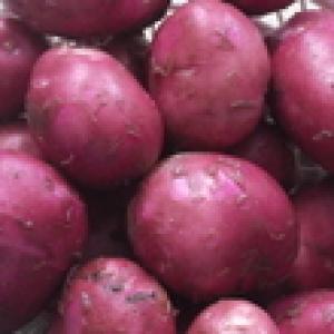 Młody  ziemniak EKO Bellarosse od p.Kot