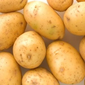 Ziemniaki Tajfun młode  EKO  od p. Adamczyka