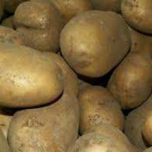 Ziemniaki Tajfun 10kg EKO od p. Adamczyka