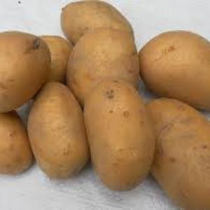 Ziemniaki Miłek EKO od p. Laska