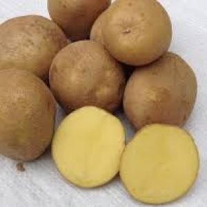 Ziemniaki Michalina 10kg  EKO od p. Adamczyka