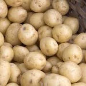 Ziemniaki MŁODE  Ignacy EKO od p. Adamczyka