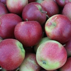 Jabłka Eliza EKO od p. Laska