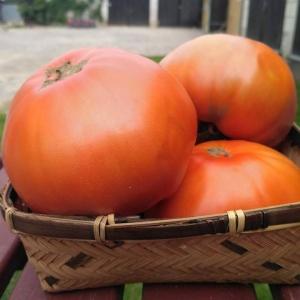Pomidor malinowy EKO  (SZTUKA)  od 600 do 800 gram od Adamczyka