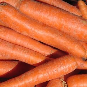 Marchew, marchewka ekologiczna z gospodarstwa p. Marczaka opakowanie 10 kg