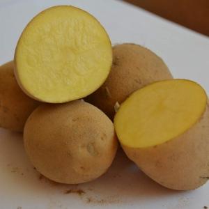 Ziemniaki  Denar EKO od p. Czaja