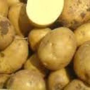 Ziemniaki Ignacy 10kg EKO od p. Adamczyka