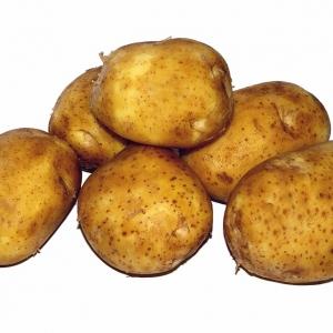 Ziemniaki młode eko od p. Iskry