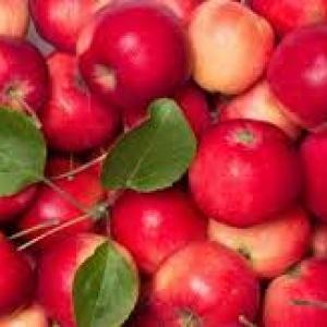 Jabłka deserowe 10kg EKO od p. Laska